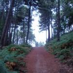Un nuovo intento un nuovo Cammino di Santa Giulia 2012
